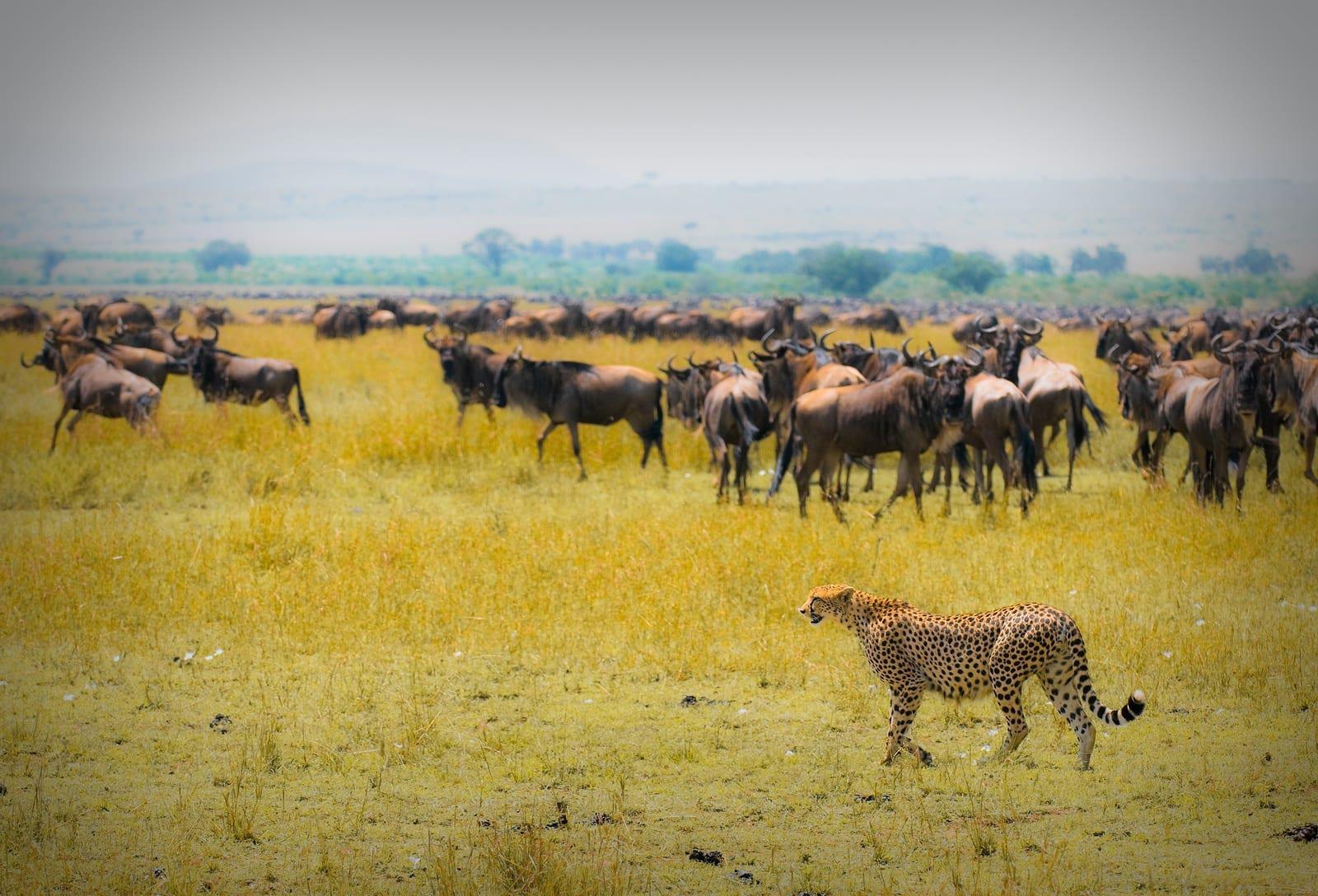 Mara-Naboisho Conservancy